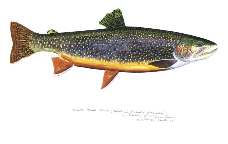 James Prosek's Coaster Brook Trout